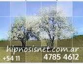 hipnosis terapia contacto en buenos aires +54 11 4785 4612 arbol de la vida