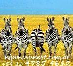 psicologia hipnosis terapia: cebras ordenadas